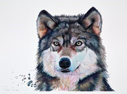 Golden Eyes by Sarah Stokes -  sized 30x22 inches. Available from Whitewall Galleries